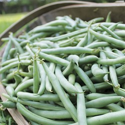 Picture of Beans Bush - 500 gm
