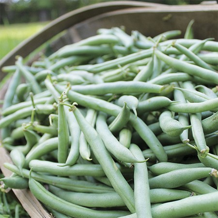 Picture of Beans Bush - 250 gm