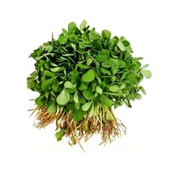 Picture of Fenugreek/Methi - 1pc